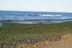 Alghe_spiaggia