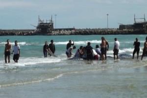 Balene spiaggia vasto