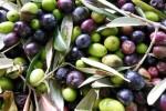 Olio di semi venduto per extravergine, indagini anche nel pescarese