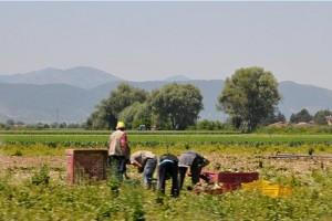 Immigrazione Abruzzo