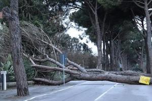 Maltempo albero caduto abbattuto vento raffiche