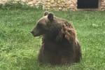 Incontri un orso? Ecco cosa fare