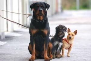 Teramo cani area riservata Vezzola
