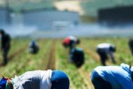 agricoltori fucino asl medici domicilio