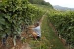 agricoltura pesca aiuti Abruzzo