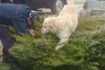 cane cespuglio bimbo pescara nascosto