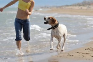 cani spiaggia animali