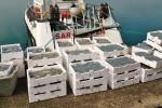 cassette polistirolo gratis Marineria pescara