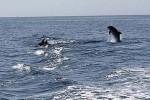 delfino avvistato pineto