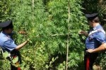 piantagione marijuana fiume Pescara Alanno