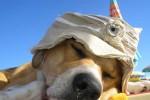 spiaggi cani rissa
