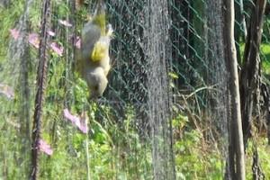 uccelli cacciagione illegale reti